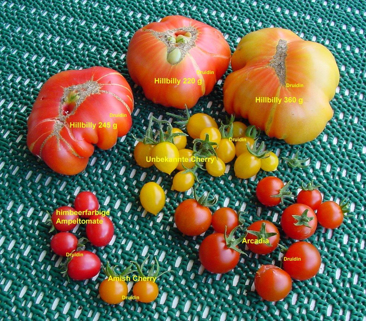 kraut r ben forum tomaten plaudereien 4 seiten. Black Bedroom Furniture Sets. Home Design Ideas
